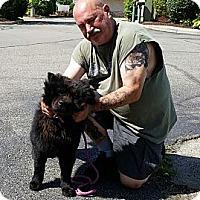Adopt A Pet :: Baby Bear - Holland, MI