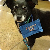 Adopt A Pet :: William - Phoenix, AZ
