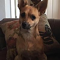 Adopt A Pet :: Rosie - Sacramento, CA