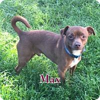 Adopt A Pet :: Max - Va Beach, VA