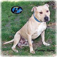 Adopt A Pet :: Pretty Ricky - Howell, MI