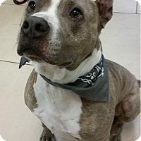 Adopt A Pet :: Chaco - Marietta, GA