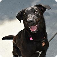 Adopt A Pet :: Duchess - Cumming, GA