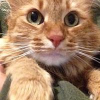 Adopt A Pet :: Hannah (cl) - Alpharetta, GA