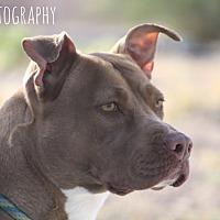 Adopt A Pet :: Star - Las Vegas, NV