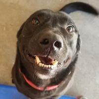 Adopt A Pet :: Jack - Wellsville, NY