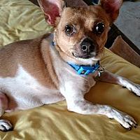 Adopt A Pet :: Peanut - San Diego, CA