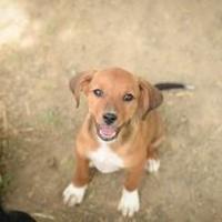 Adopt A Pet :: Jackie - Von Ormy, TX
