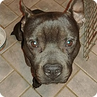 Adopt A Pet :: Kipper - Northeast, OH