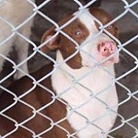 Adopt A Pet :: Sunstone - Alpharetta, GA