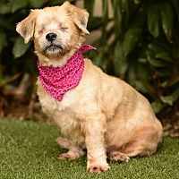 Adopt A Pet :: Tyra - Rancho Palos Verdes, CA