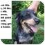 Photo 1 - Australian Shepherd Mix Dog for adoption in Zanesville, Ohio - # 370-10 @ Animal Shelter