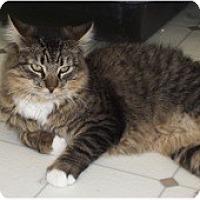 Adopt A Pet :: Stripes - El Cajon, CA