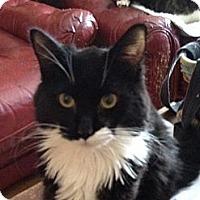 Adopt A Pet :: Marty - Wenatchee, WA