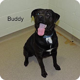 Labrador Retriever Mix Dog for adoption in Slidell, Louisiana - Buddy