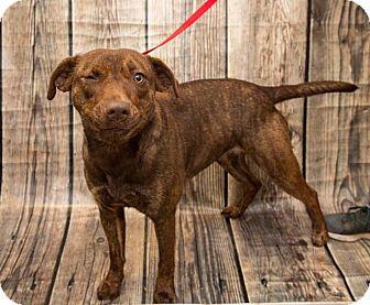 Mixed Breed (Medium) Mix Dog for adoption in Boonsboro, Maryland - Bindi