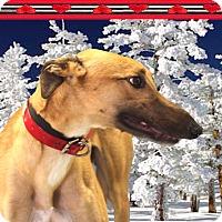 Adopt A Pet :: Marvel - Spencerville, MD