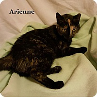 Adopt A Pet :: Adrienne - Bentonville, AR