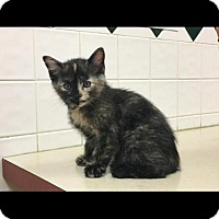 Adopt A Pet :: Snow White - Cincinnati, OH