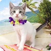 Adopt A Pet :: Winky - Harrisonburg, VA