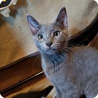 Adopt A Pet :: Opal - Stafford, VA
