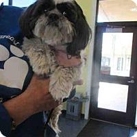 Adopt A Pet :: MITZIE - Santa Maria, CA
