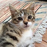 Adopt A Pet :: Molly - West Orange, NJ