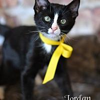 Adopt A Pet :: Jordan - Spring, TX