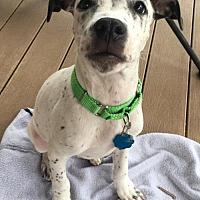 Adopt A Pet :: Spark - Princeton, MN