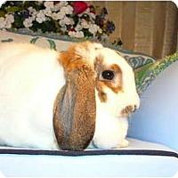 Adopt A Pet :: Theodora - Newport, DE