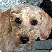Adopt A Pet :: Mina - Oakley, CA