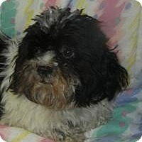 Adopt A Pet :: Fuzzy Osbourne ADOPTED!! - Antioch, IL