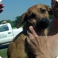 Adopt A Pet :: Rufus - Council Bluffs, IA