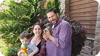 Dachshund/Miniature Pinscher Mix Puppy for adoption in Sacramento, California - Jilly