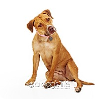 Adopt A Pet :: Bella Luv - Scottsdale, AZ