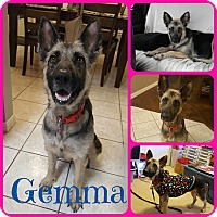 Adopt A Pet :: Gemma - Ft Worth, TX
