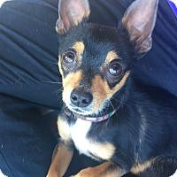 Adopt A Pet :: Sparkie - San Diego, CA
