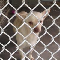 Adopt A Pet :: Rockette - Clarkesville, GA