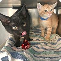 Adopt A Pet :: Roger & Oscar - Trinidad, CO