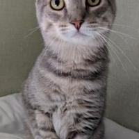 Adopt A Pet :: Hank - Stroudsburg, PA