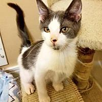 Adopt A Pet :: Rio - East Brunswick, NJ