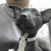 Adopt A Pet :: A293005 - Conroe, TX