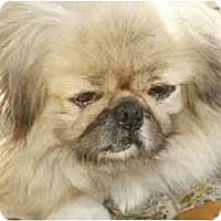 Adopt A Pet :: Maggie Mae - Morriston, FL