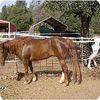 Adopt A Pet :: Taffy - Cottonwood, CA