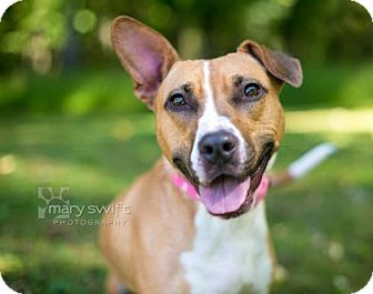 Pit Bull Terrier Mix Dog for adoption in Reisterstown, Maryland - Gabby