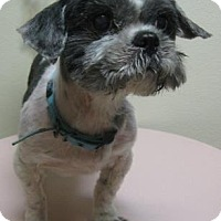 Adopt A Pet :: Walter - Gary, IN
