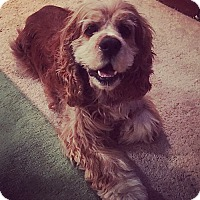 Adopt A Pet :: TEDDY - Mission Viejo, CA