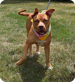 Pit Bull Terrier Mix Dog for adoption in Washington, Pennsylvania - Lagertha