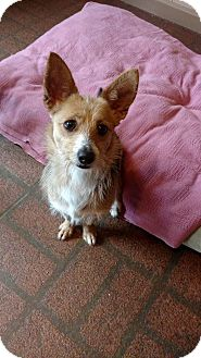 Terrier (Unknown Type, Small) Mix Dog for adoption in Glocester, Rhode Island - Skipper