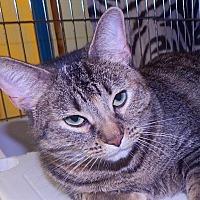 Adopt A Pet :: Peyton - Holden, MO